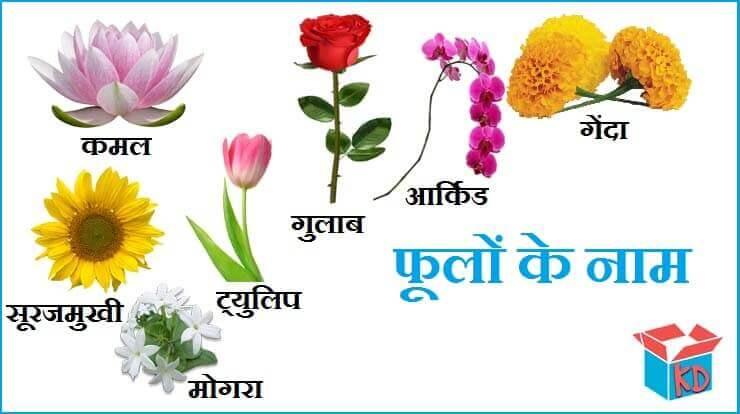 फूलों के नाम